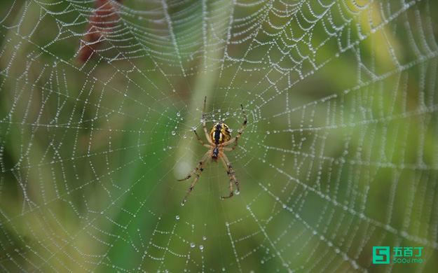 职场正能量故事:雨后的蜘蛛.jpg