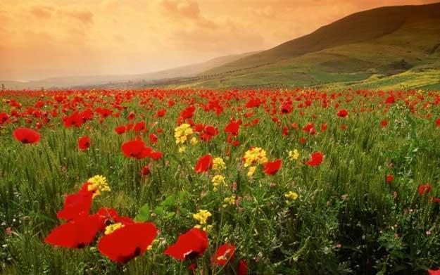 优秀人才究竟是应该做红花还是当绿叶!