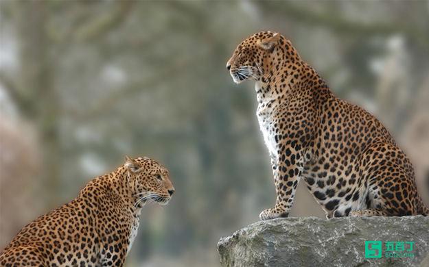 职场正能量故事:动物园管理员的烦恼