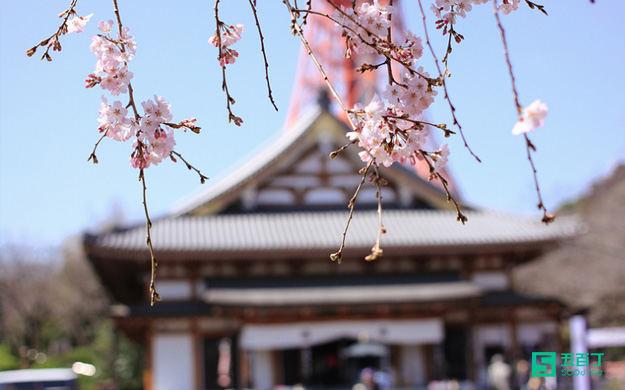 日本国立山形大学的多文化交流课